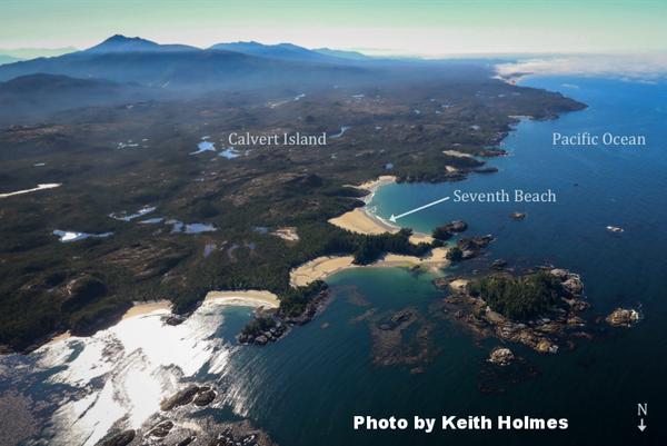 ラッコが打ち上げられているのが見つかったセブンスビーチは、カルバート島フィールドステーションから歩いて45分の場所だPhoto by Keith Holmes