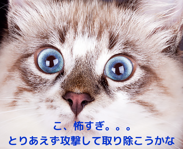 怖かったからという理由で愛猫から攻撃されてしまうこともおおいですね。。