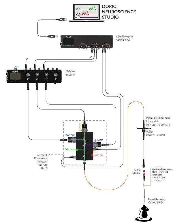 1-site Fiber Photometry System - Isosbestic + GFP + RFP|405nm, 465nm, 560nm