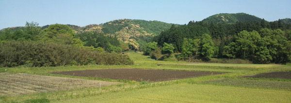 写真中央の山にカリフラワーのような黄緑色の樹木が見え、椎の木の花が咲いたことがわかります。(※クリックすると拡大します)