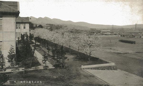 大分高商の本館前の桜並木、運動場、遠景に高崎山、由布山、鶴見山を眺めた絵葉書(著者所収)