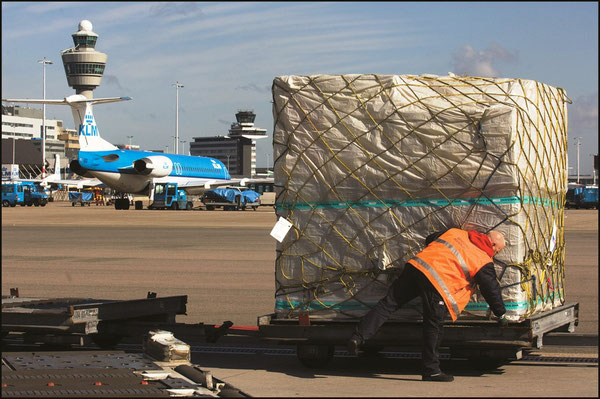 The number of cargo handlers at AMS might be reduced  -  company courtesy