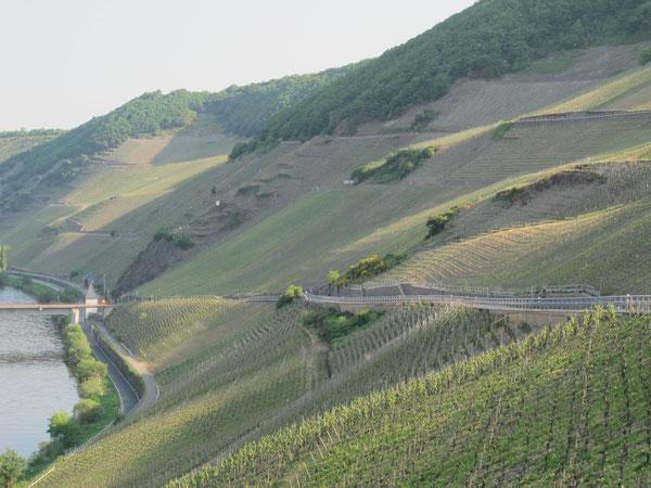 Steillagen bei Trittenheim