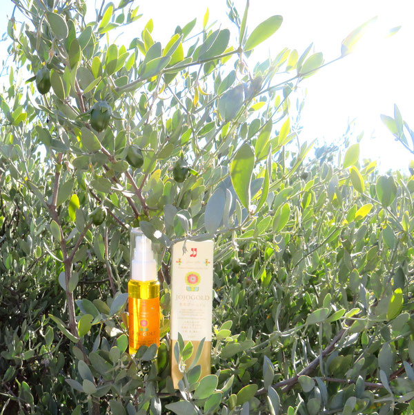 "♔ JOJOBA SPIRITS JOJOGOLD ""Mystic dew"" - a golden Oasis for your skin."