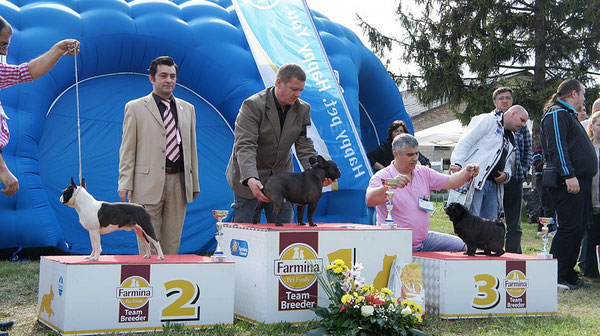Nelson as BEST OF GROUP on CAC Nova Pazova. Judge Kosta Gligorievski (MKD)
