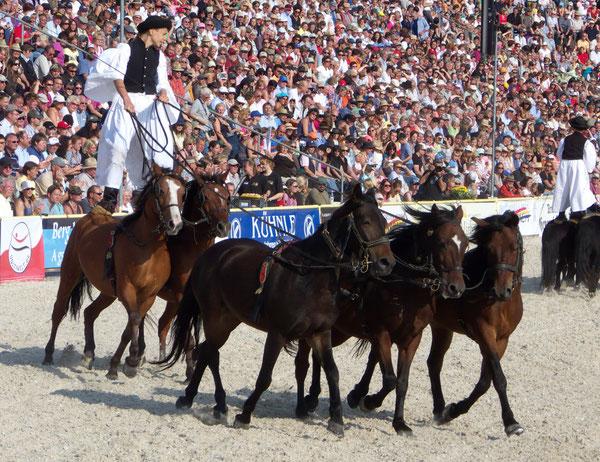 """""""UNGARISCHE POST"""", Hengstparade Marbach 2009/Marbach Stallion Parade 2009, Marbach (Gomadingen), Germany, 09.09.2009, Lumix Fz18. Foto: Eleonore Schindler von Wallenstern."""