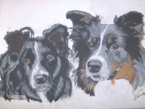 Tally und Lizzy, Border Collies