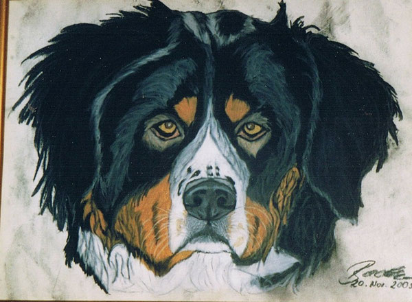 Barny-Bernersennenhund