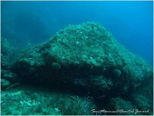Paysages sous marins, Pierres et algues