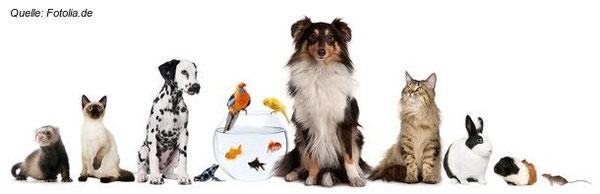 Unsere geliebten Haustiere