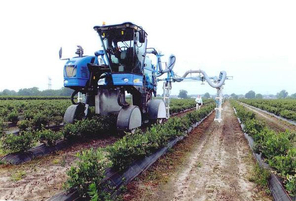 近年オランダにおけるブルーベリー生産は拡大している農業機械は農薬散布用機械 高うねで除草マルチに注目