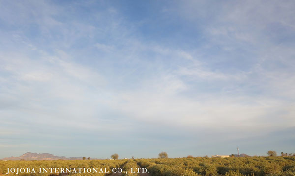 ♔ JOJOBA PHOTOS 於: 原種ホホバの聖地、アリゾナ州ハクアハラヴァレー
