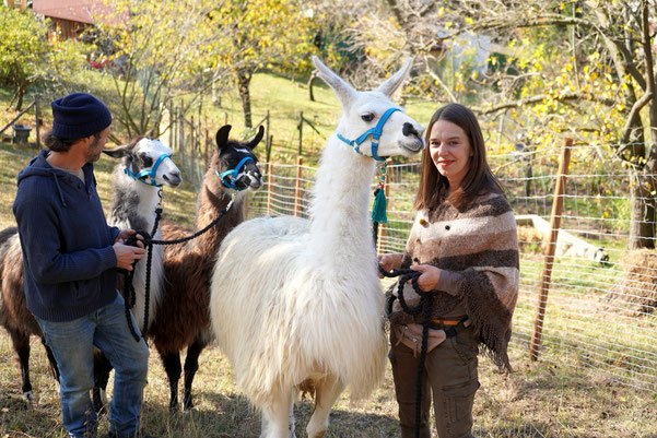 Lamawanderung, Lama wandern, Lama Erlebnis, Familienausflug, Lama Mama, Sommerein, Niederösterreich