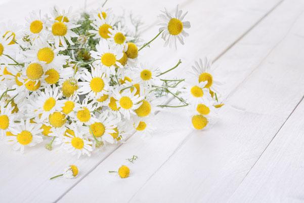 Kamille fördert die Gesundheit, desinfiziert, heilt und beruhigt