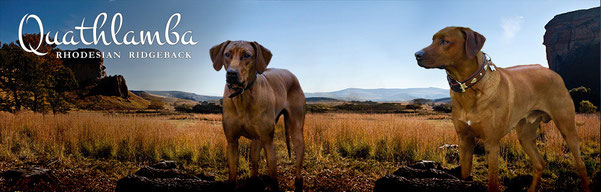 Rhodesian Ridgeback Kennel of Quathlamba