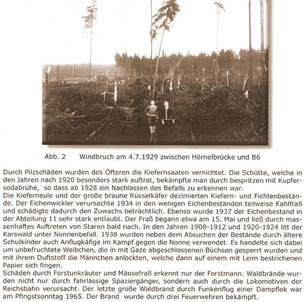 Bild: Teichler Karswald Seeligstadt Waldereignisse
