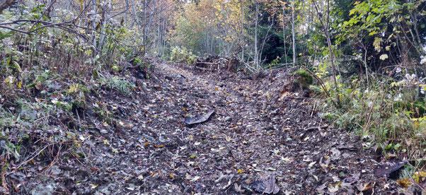 Le nouveau raccourci sauvage entre 1650m et 1550m sur le sentier du Crozet