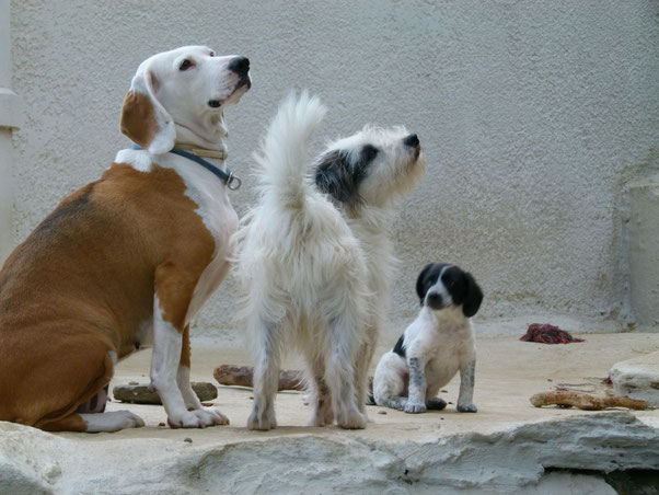 3 rescued dogs