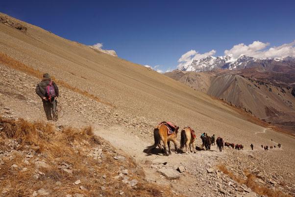 Weg, Berge, Pferde, Erkenntnis, Perspektive, Psychotherapie