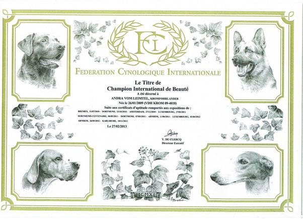 Andra- FCI- Internationaler Schönheits Champion