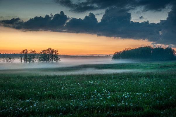 Morgennebel bei Wolgast