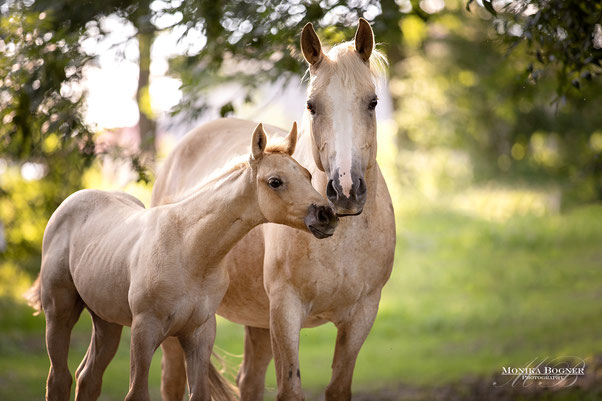 Stute mit Fohlen, Fotoshooting mit Tierkindern