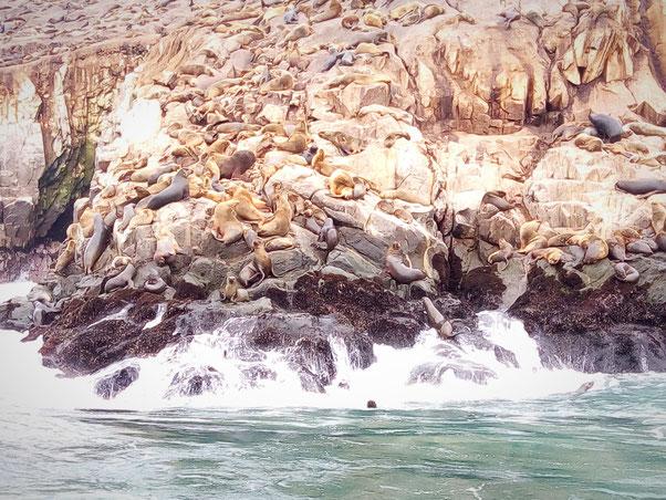 Iles Palomino, Lima, Pérou
