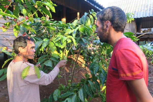 Visite de la plantation de café