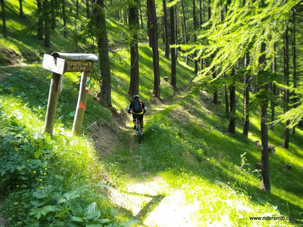 attraversiamo boschi fiabeschi con saliscendi molto divertenti