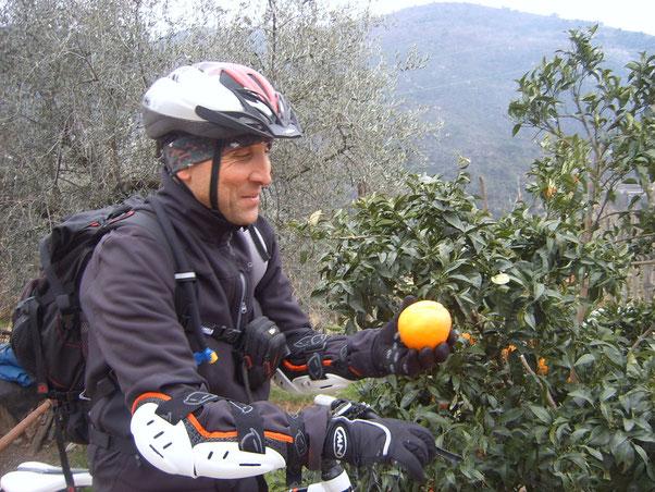 """Rubare un'arancia in Riviera non ha prezzo...specialmente se  c'e' il proprietario """"LIGURE"""" al balcone !!!"""