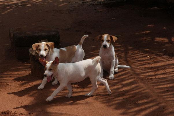 Verspielte junge Hunde bei Francoise und Aime
