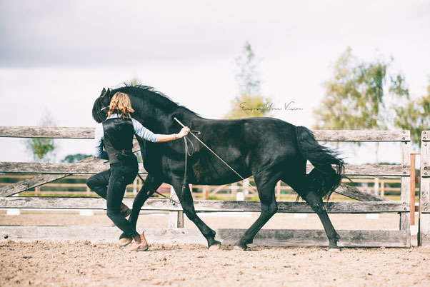 Acedemische rijkunst, ruggebruik paard, grondwerk, rechtrichten