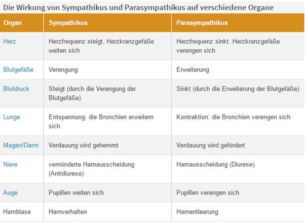 Nervensystem und Gehirn - Vorbereitung auf den MSA in Deutsch, Mathe ...