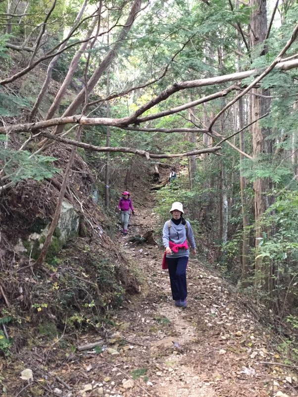 鳳来寺山周遊コースの下り