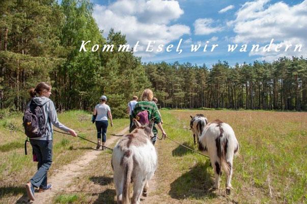 Wandern mit Eseln im Wendlan