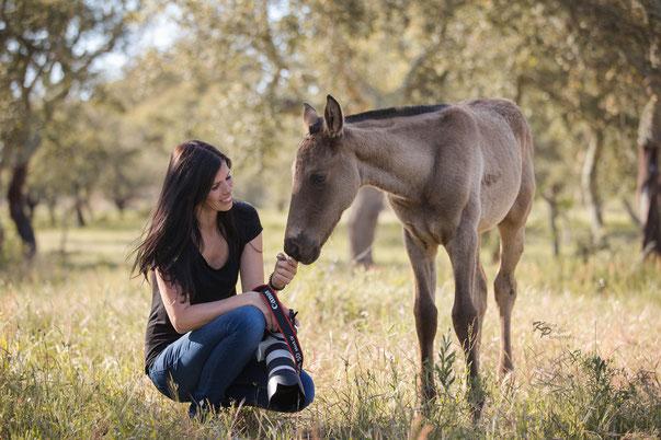 Pferdefotografie, Deutschland und Europa