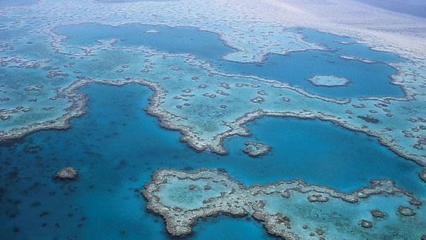 Cairns Reisetipps: Great Barrier Reef