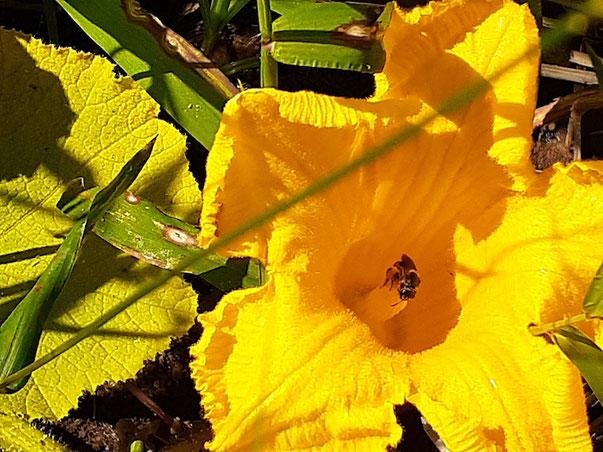 夏のミツバチはいろいろ大変!