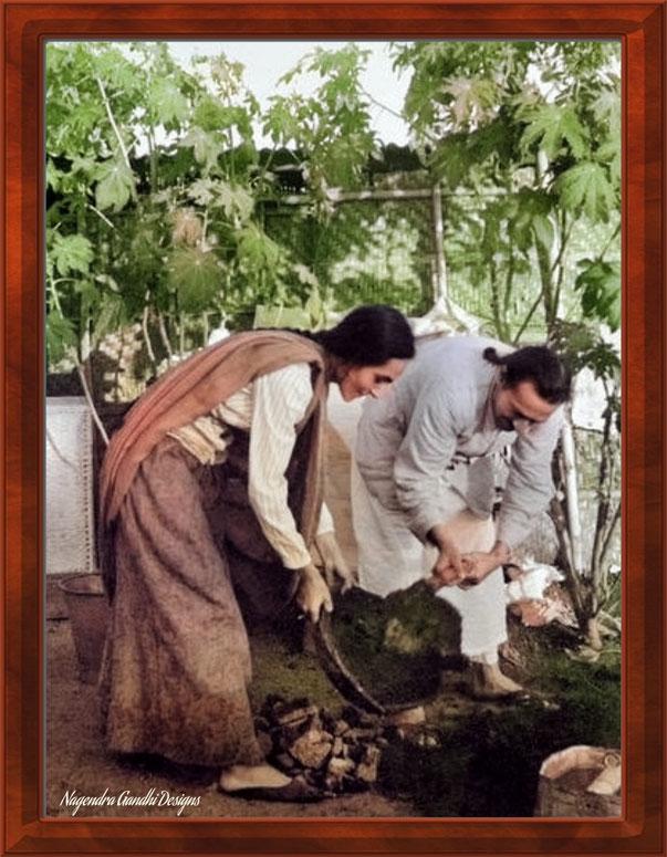 36. Baba with Mehera Irani gardening. Colourization by Nagendra Gandhi