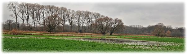 Eine Feuchtwiesenlandschaft