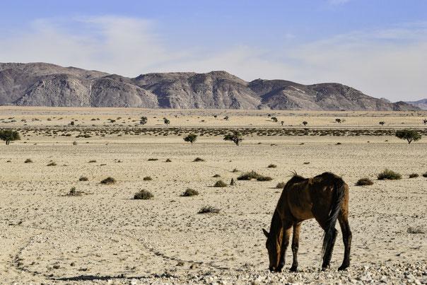 Un Cavallo Selvaggio nel deserto