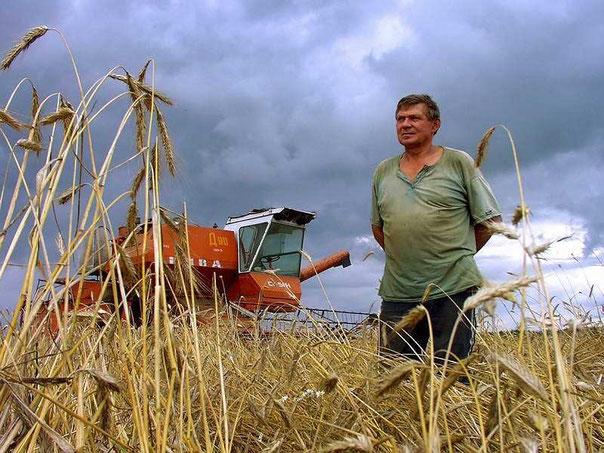 Сельскохозяйственная техника-зерноуборочные комбайны