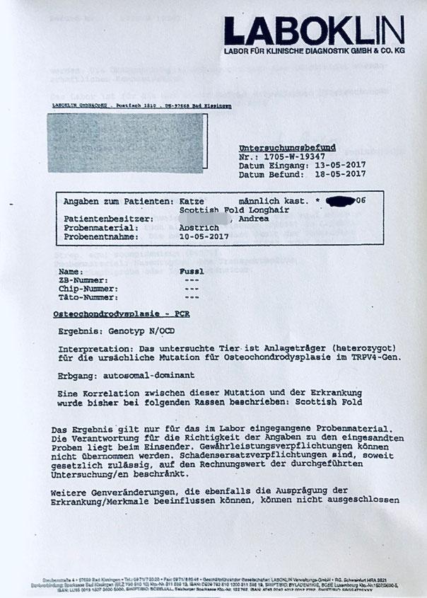 Untersuchungsbefund, OCD-DNA-Test vom an OCD erkrankten Faltohr-Kater F., Genotyp OCD/ocd