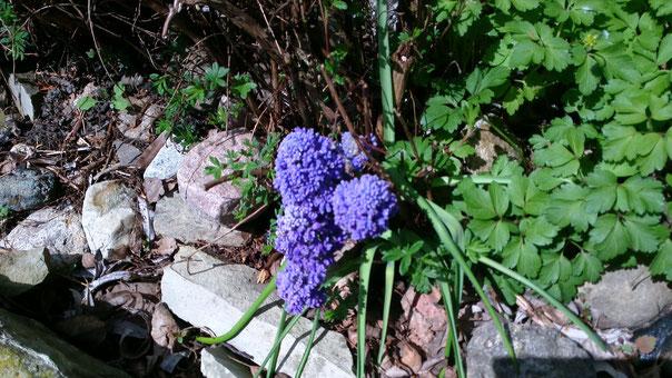 3-4 Blüten, Highlighjts einer Rede