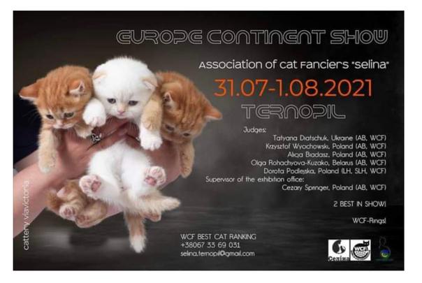 2021, Scottish Fold Katze (Qualzucht) als Werbeträger auf einem Plakat eines Katzenvereins, der Mitglied in der WCF ist