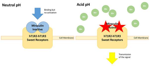 Sweet Dreams: Healthy and Sweet Food By Bioengineering