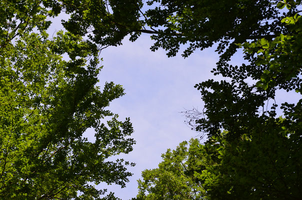 Lebensraum Wald kennenlernen