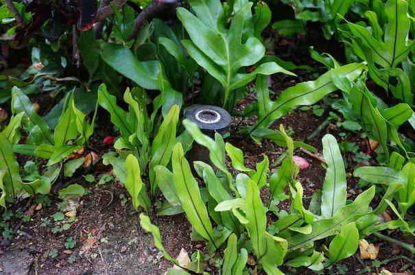 道路脇の植栽帯に埋め込まれたスプリンクラー