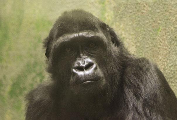 KIKI im Zoo Antwerpen (Belgien) / © Foto: Heike Arranz Rodriguez