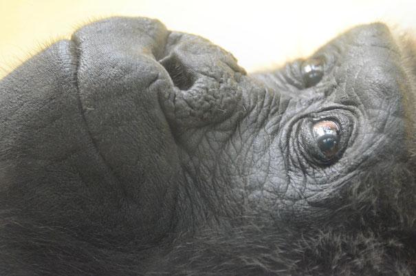 FATOU - Berliner Zoo / © Heike Arranz Rodriguez